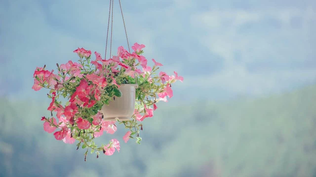 https://digitalhealthbuzz.com/wp-content/uploads/2020/04/pink-petaled-flower-plant-inside-white-hanging-pot-906150-1280x720.jpg